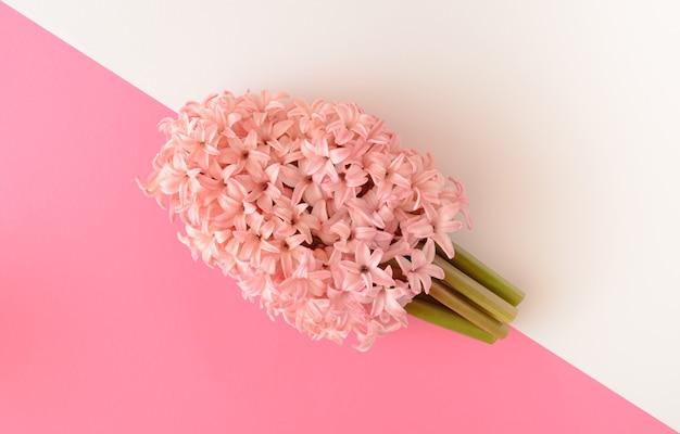 Fiore di giacinto su una combinazione di sfondo rosa e bianco. concetto di primavera. disposizione piatta.