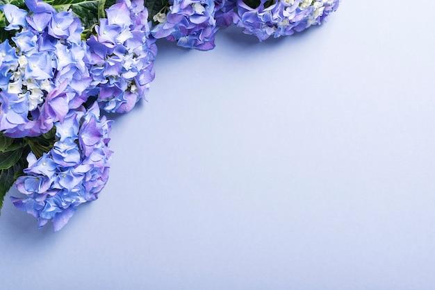 Fiori dell'ortensia sulla tavola blu