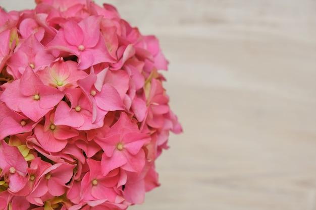 Ortensie fiori rosa close-up su beige shabby chic background.copia dello spazio.