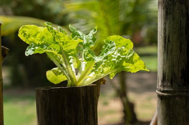 La piantagione idroponica fa dalla natura