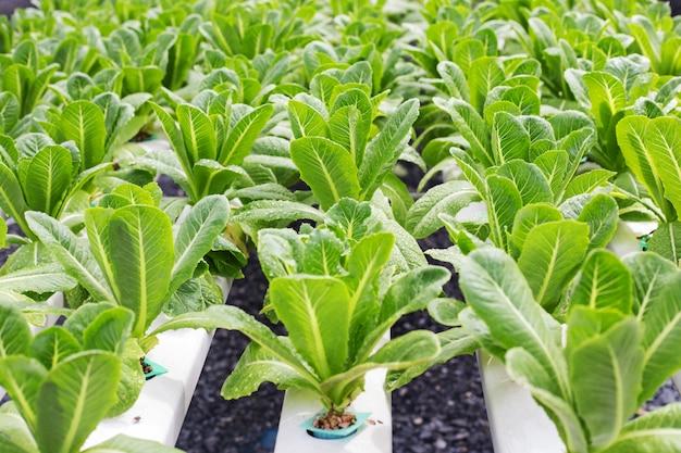 Metodo di coltura idroponica