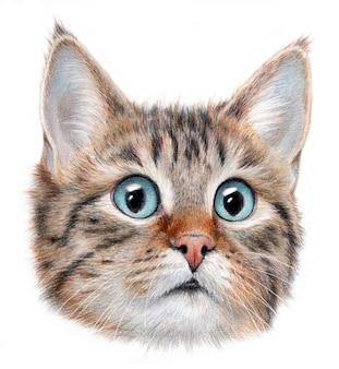 Ritratto iperrealistico di un gatto con gli occhi blye. isolato su uno sfondo bianco.