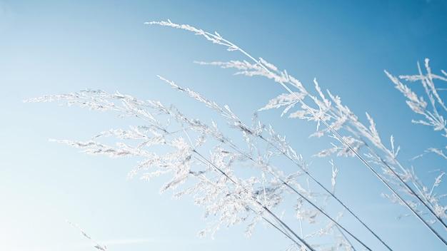 Erba ricoperta di ghiaccio su uno sfondo di cielo blu