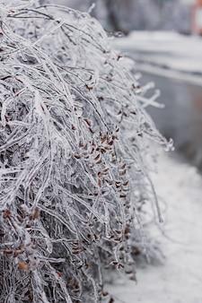 Rami di alberi coperti di ghiaccio da una tempesta di ghiaccio. i ghiaccioli si stanno formando dalla pioggia gelata.