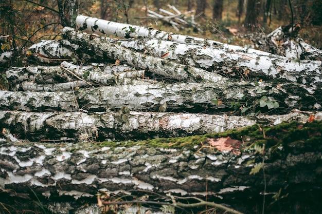 Abbattimento illegale di foreste e alberi in un parco naturale