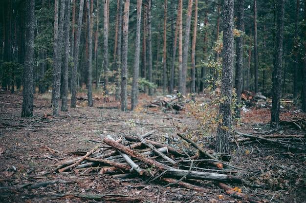 Abbattimento illegale di foreste e alberi in un parco naturale Foto Premium