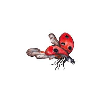 Illustrazione della coccinella naturale realistica. insetto volante del primo piano. pittura ad acquerello