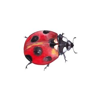 Illustrazione dell'insetto naturale realistico della coccinella. vista dall'alto del primo piano. pittura ad acquerello