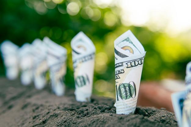 Immagine di banconote arrotolate intorno alle piante sul suolo per affari, risparmio, crescita, concetto economico. produzione di colture redditizie. guadagna in agricoltura