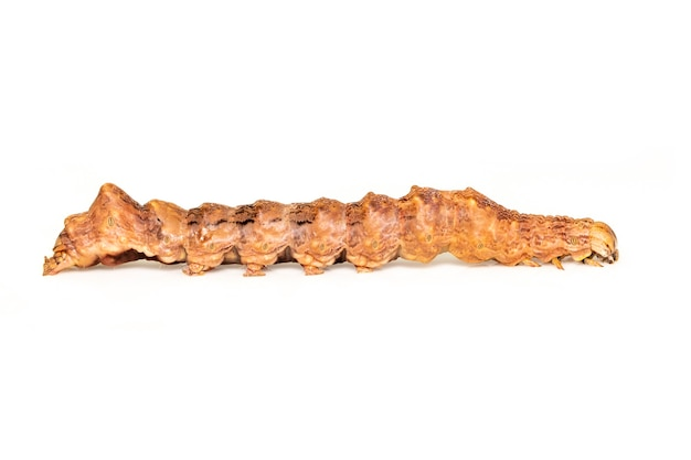 Immagine di bruchi marroni isolati su sfondo bianco. animale. insetto.