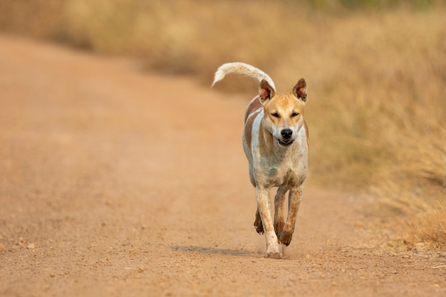 Immagine del cane a strisce marrone e bianco sulla natura.