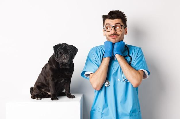 Immagine del veterinario medico maschio bello guardando il cane pug nero carino seduto sul tavolo, ammirando la carineria del cucciolo, in piedi sopra il bianco.