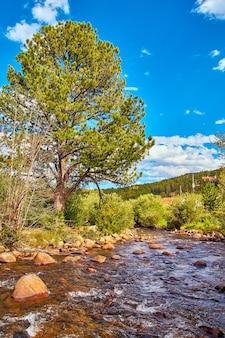 Immagine di un grande albero sul fiume piccolo torrente con cielo blu