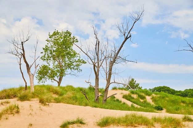 Immagine del paesaggio di dune di sabbia con sabbia e piante verdi