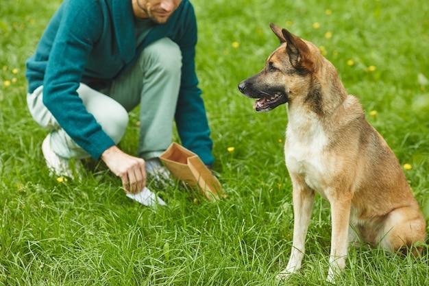 Immagine del cane da pastore che si siede sull'erba verde con il proprietario che pulisce dopo il suo cane nei precedenti