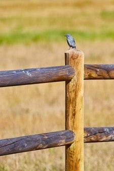 Immagine del paletto di recinzione in legno verticale con uccello blu in cima