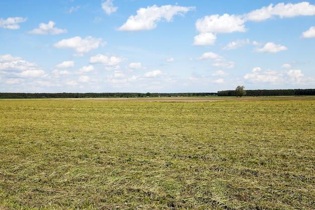 L'erba verde immatura ha fotografato l'erba verde immatura nel cielo blu di estate