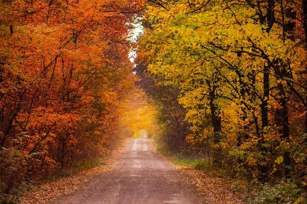 Incredibile vista sulla foresta d'autunno. bellissimo paesaggio forestale all'alba