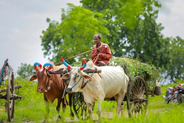 Coltivatore indiano sul carrello del toro