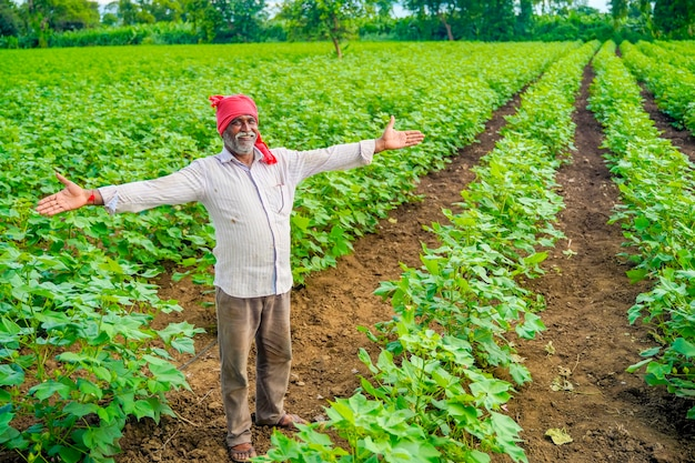 Coltivatore indiano al campo di cotone