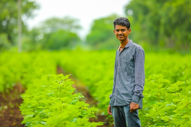 Coltivatore indiano al campo di cotone verde