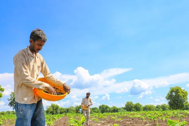 Coltivatore indiano che sparge fertilizzante nel campo della banana