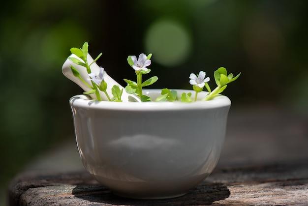 Centella asiatica, brahmi, bacopa monnieri ramo fiori, foglie verdi sulla natura.