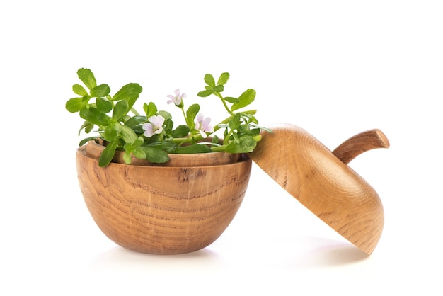 Pennywort indiano o fiore brahmi e foglie verdi isolati su sfondo bianco.