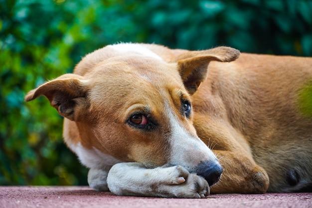 Immagini di cani di strada indiani sulla strada che guardano la telecamera