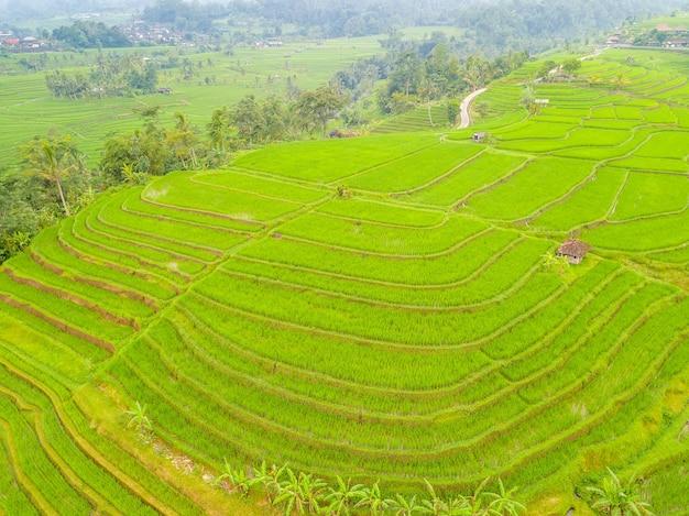 Indonesia. isola di bali. terrazze di riso e villaggio indonesiano. vista aerea