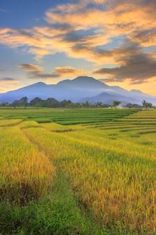 Vista del paesaggio indonesiano con montagne e cielo dell'alba al mattino in un piccolo villaggio di risaie