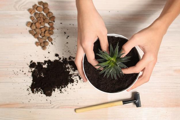 Trapianto di piante da interno fiore casa, coltivazione, cura. hobby e armonia con la natura. terreno, drenaggio e vaso. inventario del giardiniere vista dall'alto mani, guanti. foto di alta qualità