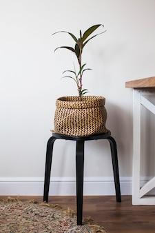 Pianta verde da interno in vaso di vimini. decorare lo spazio abitativo con piante verdi. pianta della casa. copia spazio. foto di alta qualità