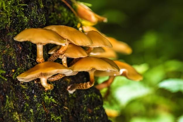 Funghi non commestibili nella foresta su un tronco d'albero