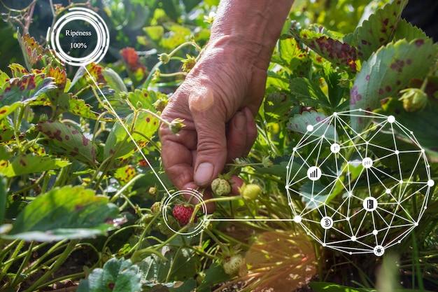 Innovazione sistema agricolo intelligente di agricoltura. usa l'intelligenza artificiale da agronomo, agricoltore per aiutare nell'analisi del prodotto, valutazione della qualità, fare statistiche, dichiarazioni di reddito nell'azienda agricola.