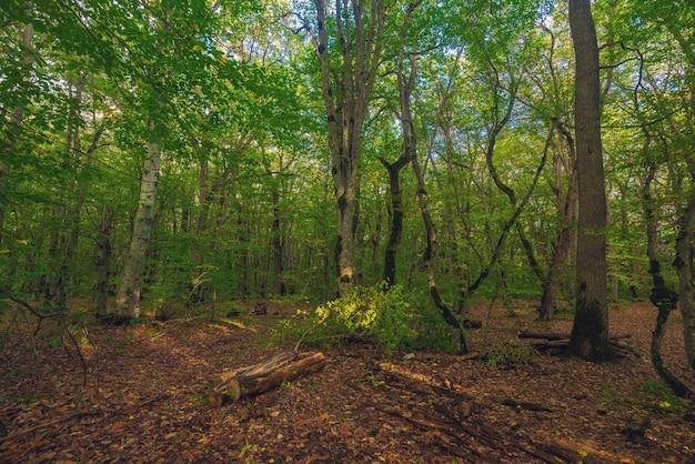 Dentro la foresta verde