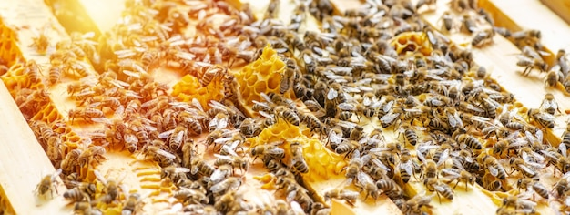 Ispezione della colonia di api in un apiario in primavera