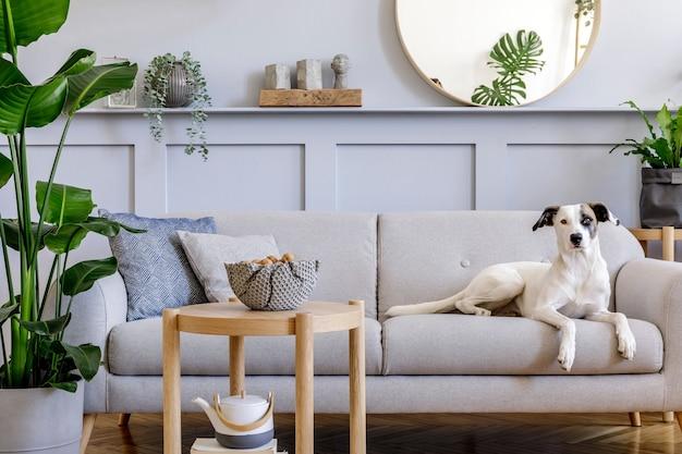 Interior design del soggiorno con elegante divano grigio, tavolino da caffè, pianta tropicale, specchio, decorazione, cuscini ed eleganti accessori personali nell'arredamento della casa