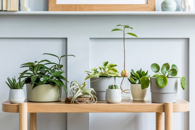Interior design del soggiorno con console in legno, bella composizione di piante in diversi hipster e vasi di design, libri ed eleganti accessori personali nel giardino di casa.