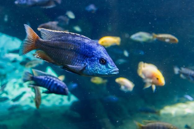 Interno di un grande acquario con centinaia di pesci tropicali.