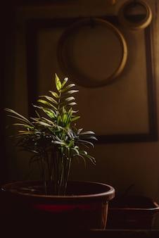 Interno con pianta tropicale in toni scuri.