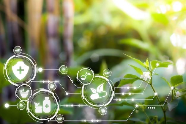 Internet delle cose futuristica tecnologia ai con concetto di medicina alternativa erbe naturali