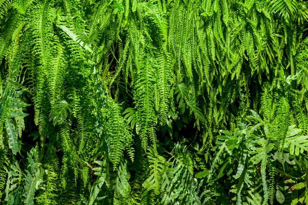 Sfondo interessante fatto di foglie verdi. sfondo verde frondoso