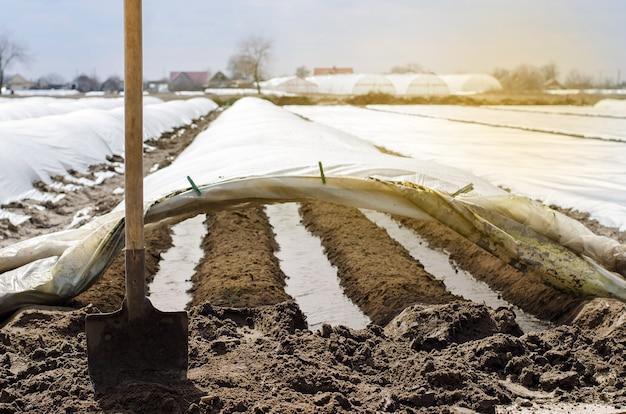 Filari di irrigazione sotto agrofibre in piccole serre spunbond