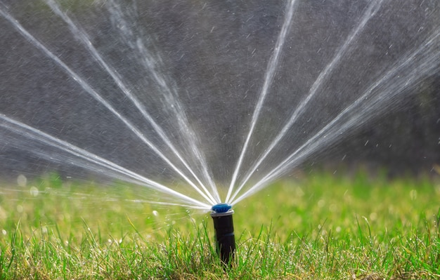 Il sistema di irrigazione innaffia il prato asciutto. cura del prato, giardinaggio.