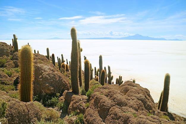 Isla incahuasi sperone roccioso riempito con grandi trichocereus pasacana cactus contro le vaste saline del salar de uyuni, bolivia, sud america