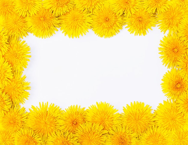 Cornice isolata di grandi denti di leone primaverili gialli luminosi ravvicinati