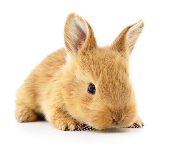 Immagine isolata di un coniglietto marrone.