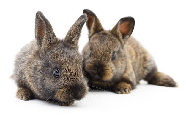 Immagine isolata di un coniglietto di due conigli