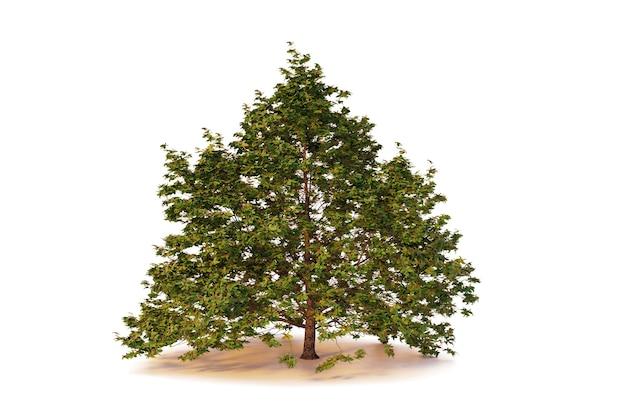 Singolo albero isolato su sfondo bianco con tracciato di ritaglio